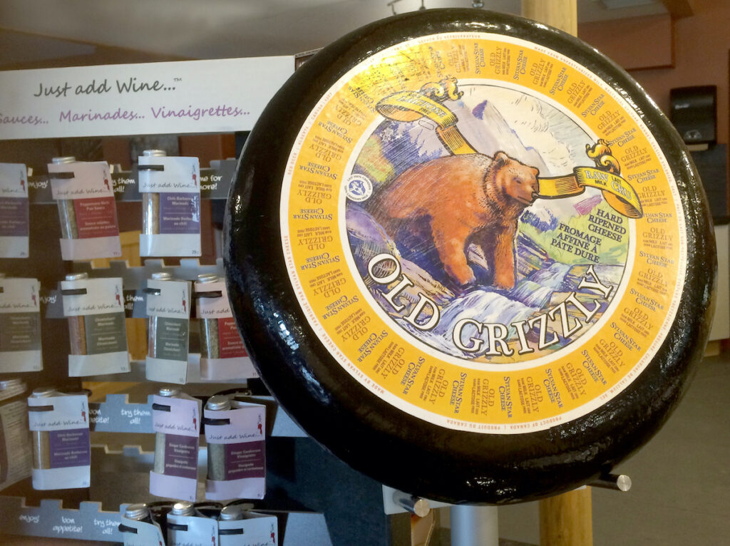 Old Grizzly cheese wheel on display, Sylvan Star, Alberta, Canada.