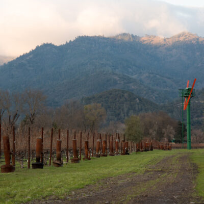 Larkmead vineyard