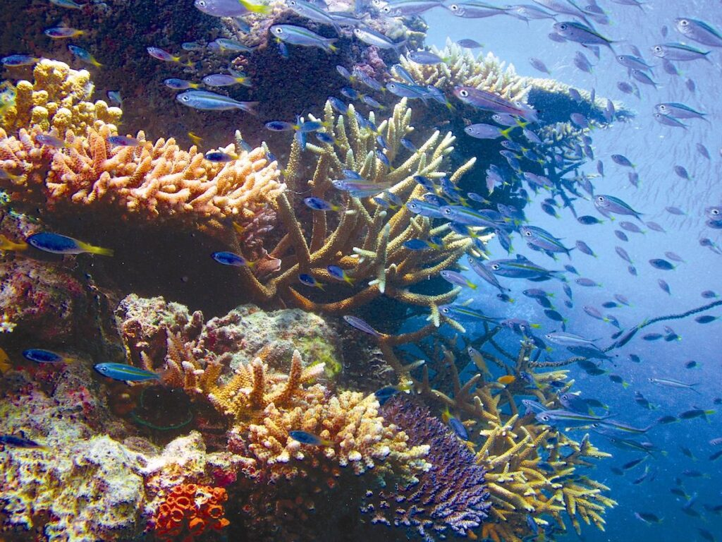 Great Barrier Reef coral.