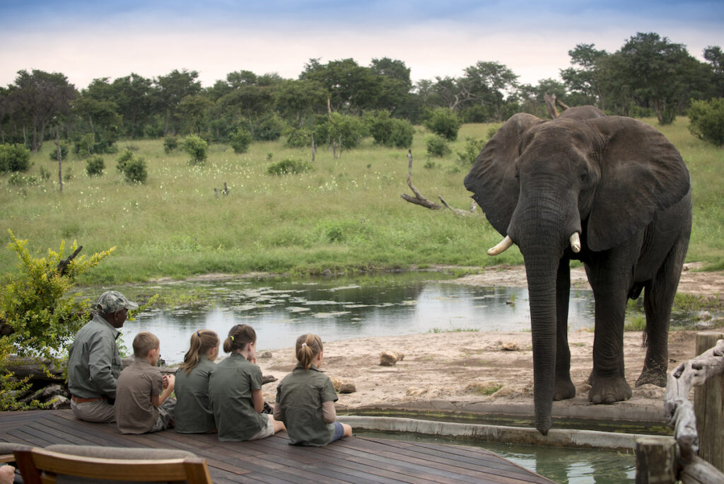 Children sitting by the pool at a hunting lodge in Zimbabwe watching elephants.