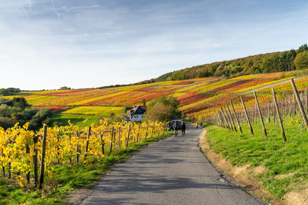 Footpath in the Ahr Valley of Germany