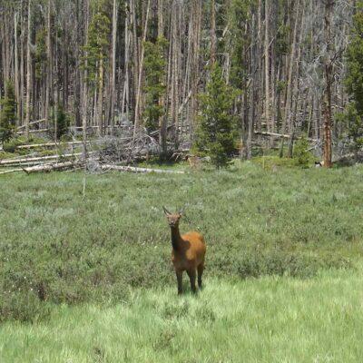 A Rocky Mountain National Park