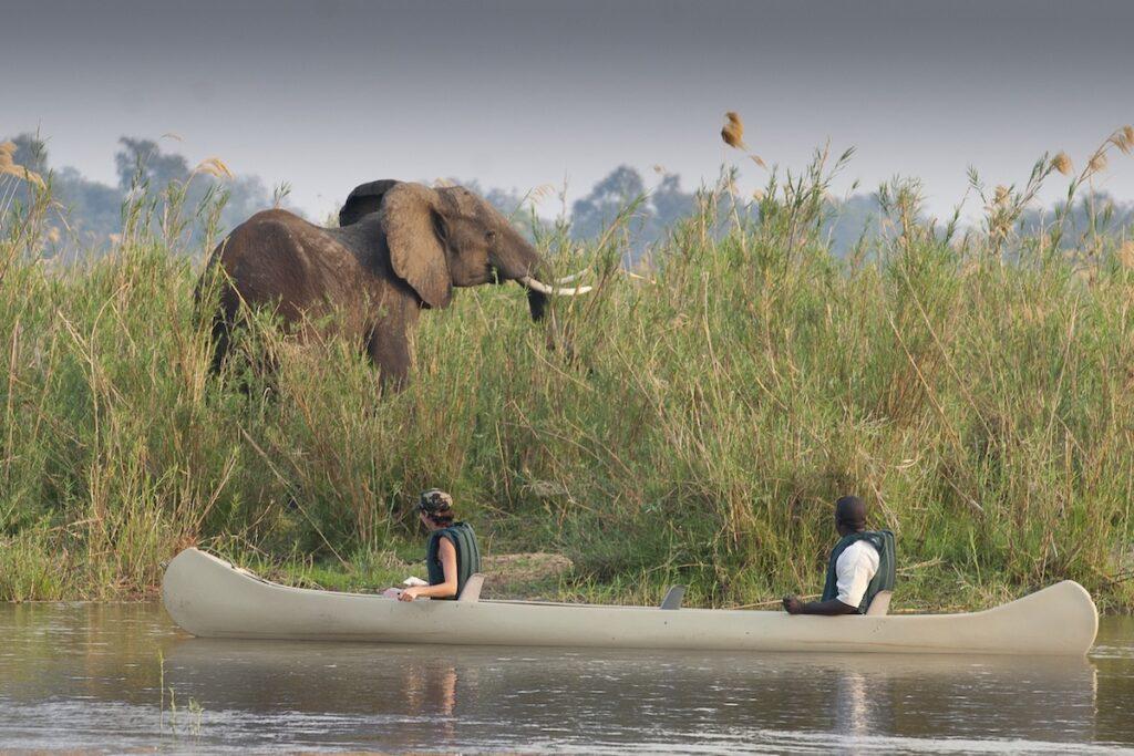Canoeing past an elephant near Lower Zambezi National Park.