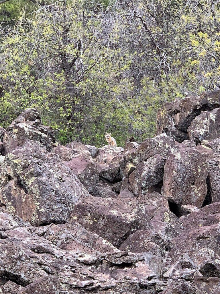 Edward Sargent Wildlife Management Area; Chama, New Mexico