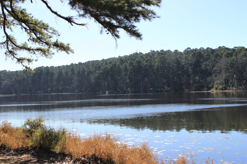 Daingerfield State Park; Daingerfield, Texas