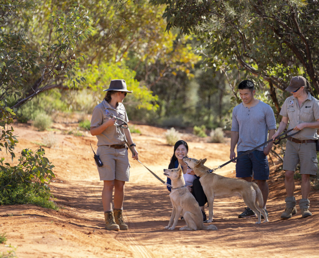 Dingo Couple meeting the dingoes at the Alice Springs Desert Park .