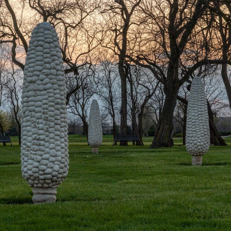 Field of Corn; Dublin, Ohio