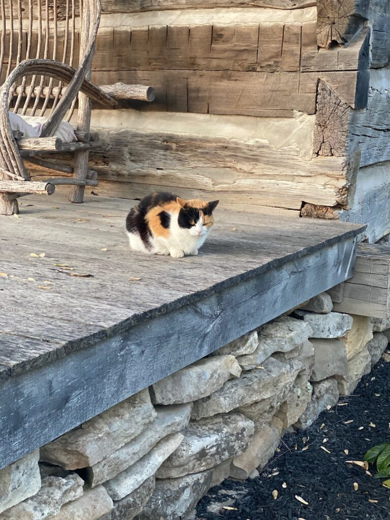 Cat naps on a wooden porch.