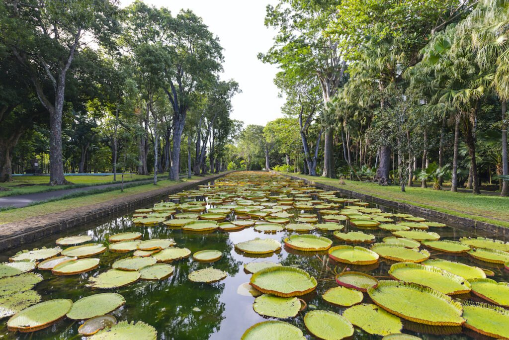 Mauritius National Botanical Garden; Pamplemousses, Mauritius
