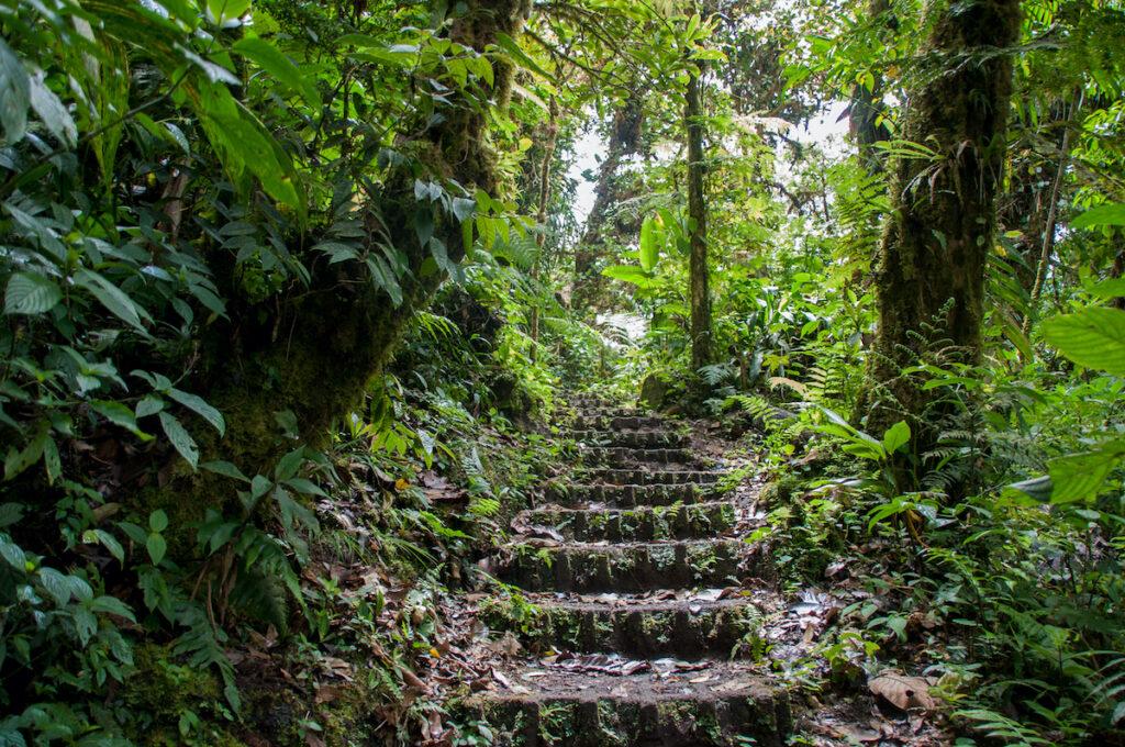 Hiking path in Monteverde, Costa Rica