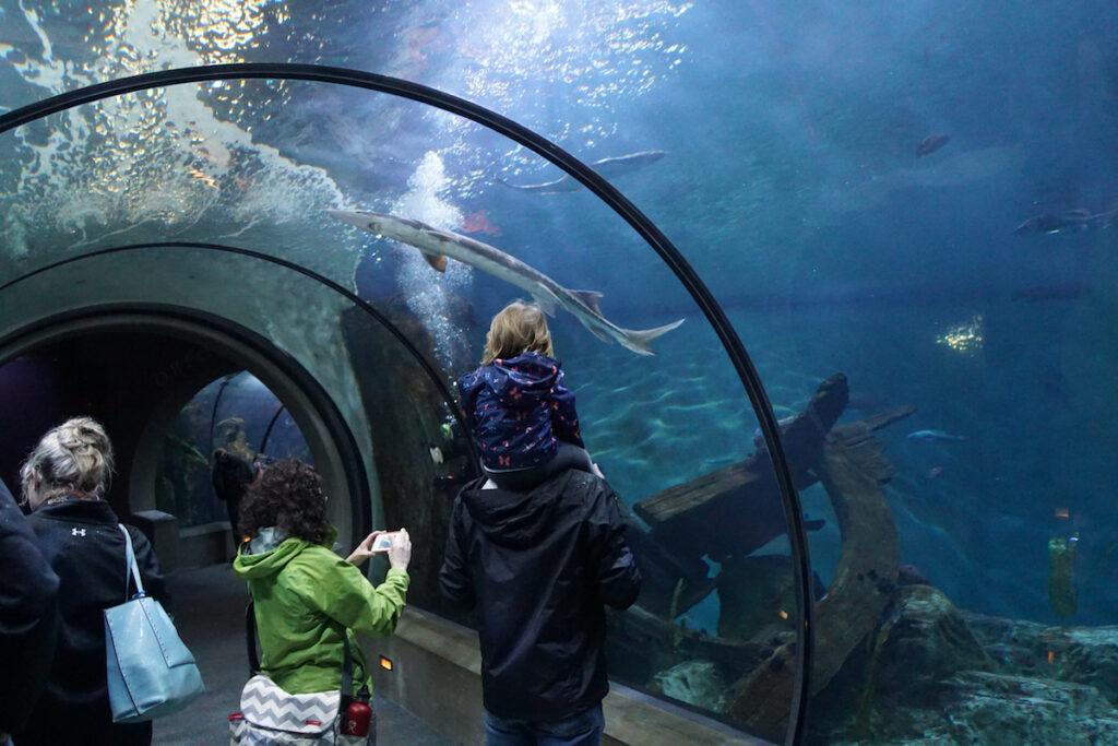 Oregon Coast Aquarium; Newport, Oregon