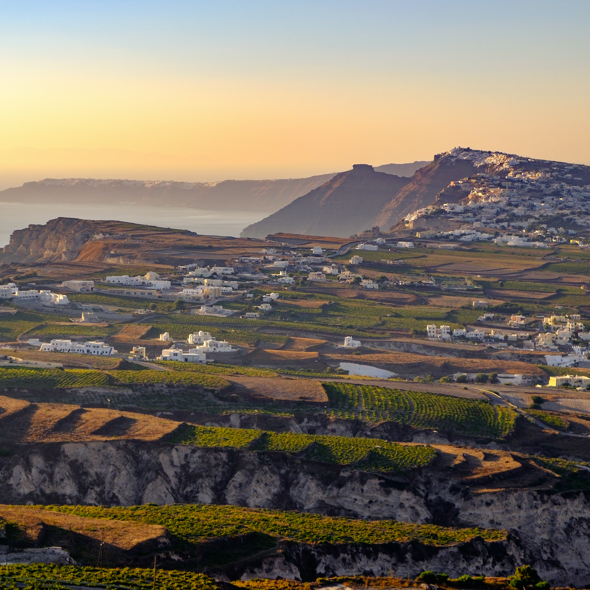 Vineyards in Santorini, Greece