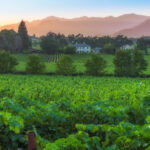 Vineyards, homes, and mountains in and near St. Helena, California.