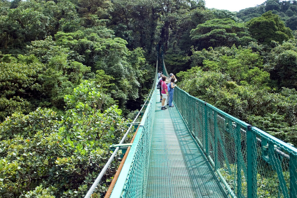 The view from a bridge in Monteverde, Costa Rica