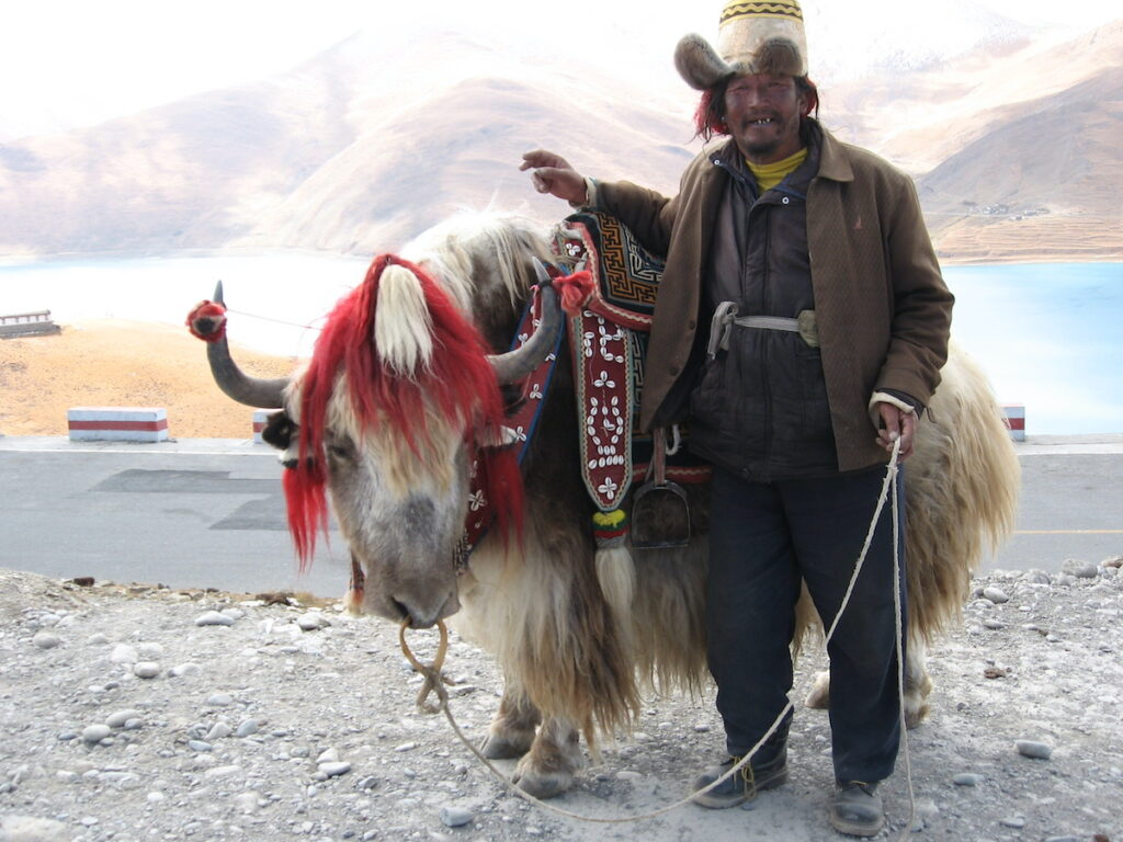Yak and Herdsman at Yamdrok Lake.