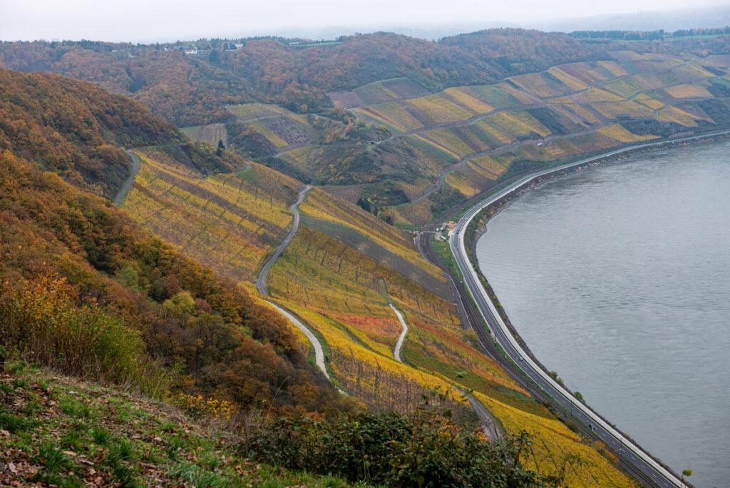Vineyards along a slope in Boppard, Germany.