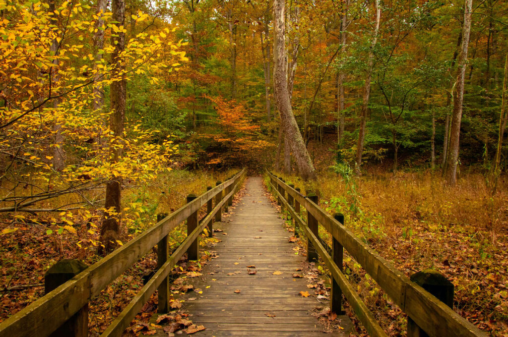 Brown County State Park in Nashville, Indiana, during fall.