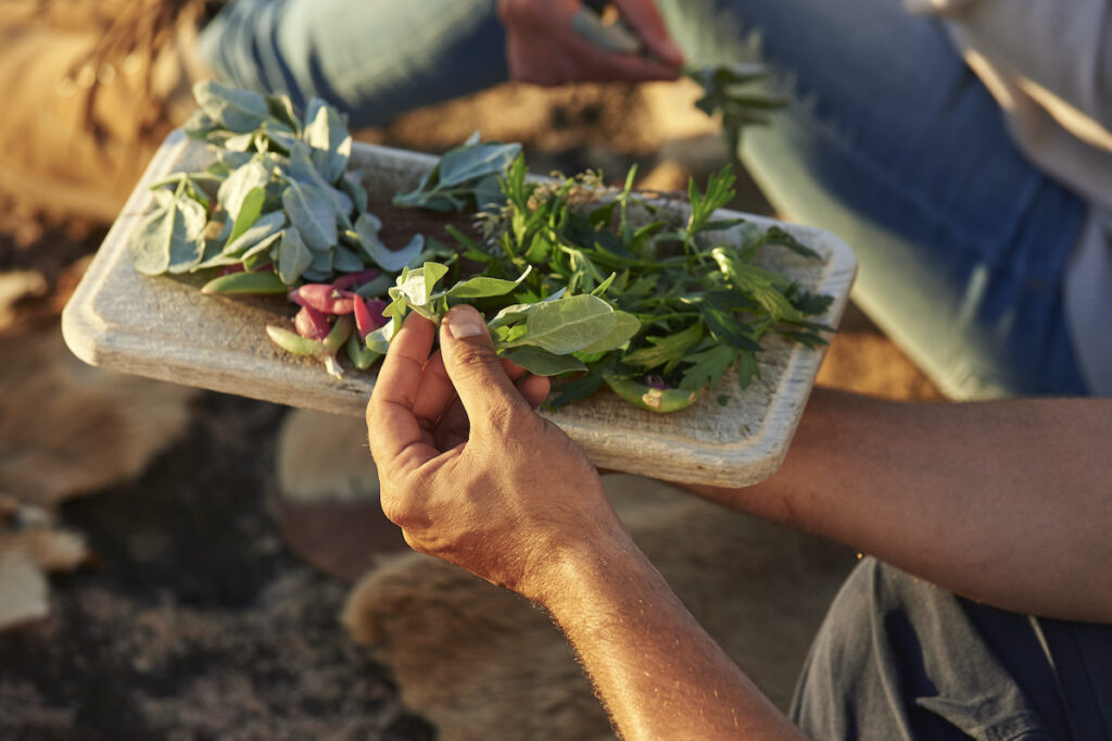 Aboriginal Cultural Tours, Koomal Dreaming, shows guest special flowers and herbs.