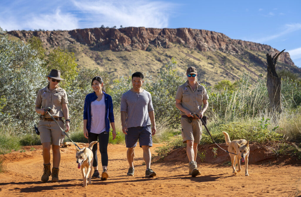 Couple walking with the dingoes at the Alice Springs Desert Park