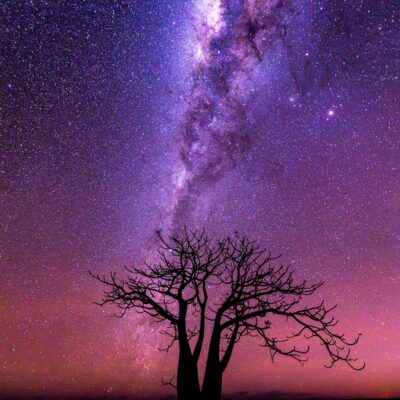 Night sky over boab tree, near Derby, Western Australia
