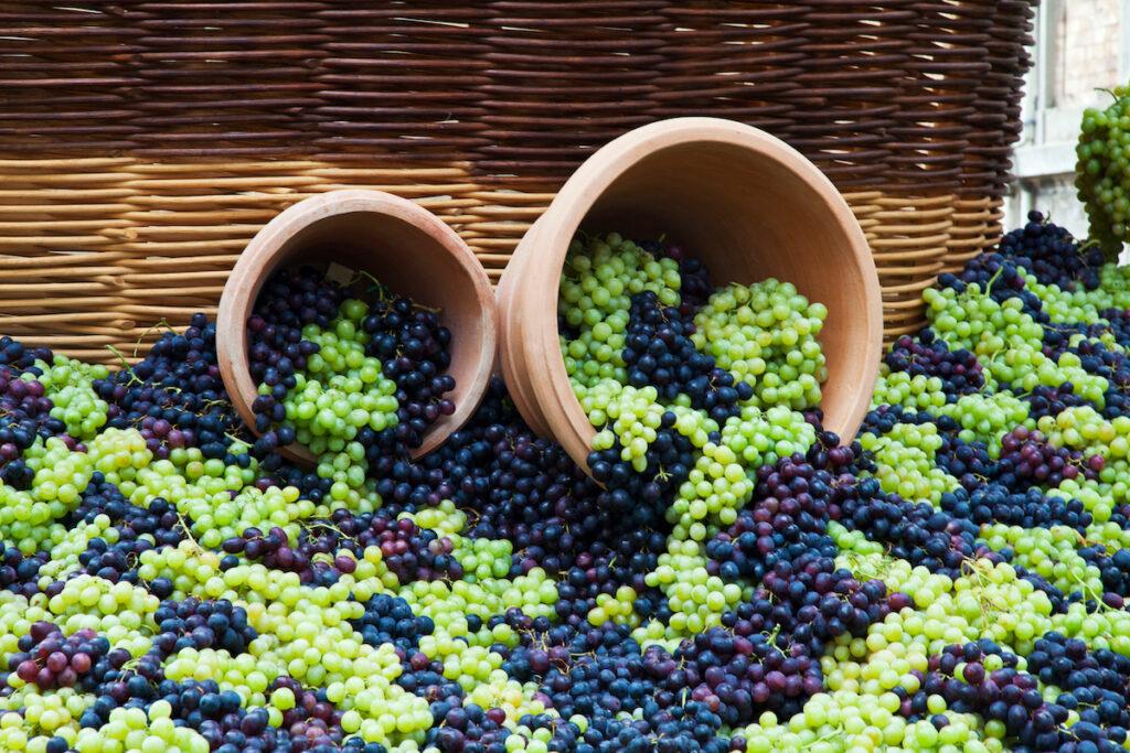 Fresh grapes at the Grape Festival in Impruneta, Italy.