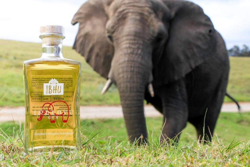 Bottle of Gin made from elephant dung with Elephant in the background.