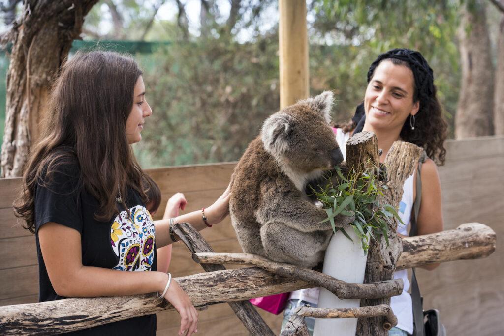 Two women pet koala at Moonlit Sanctuary