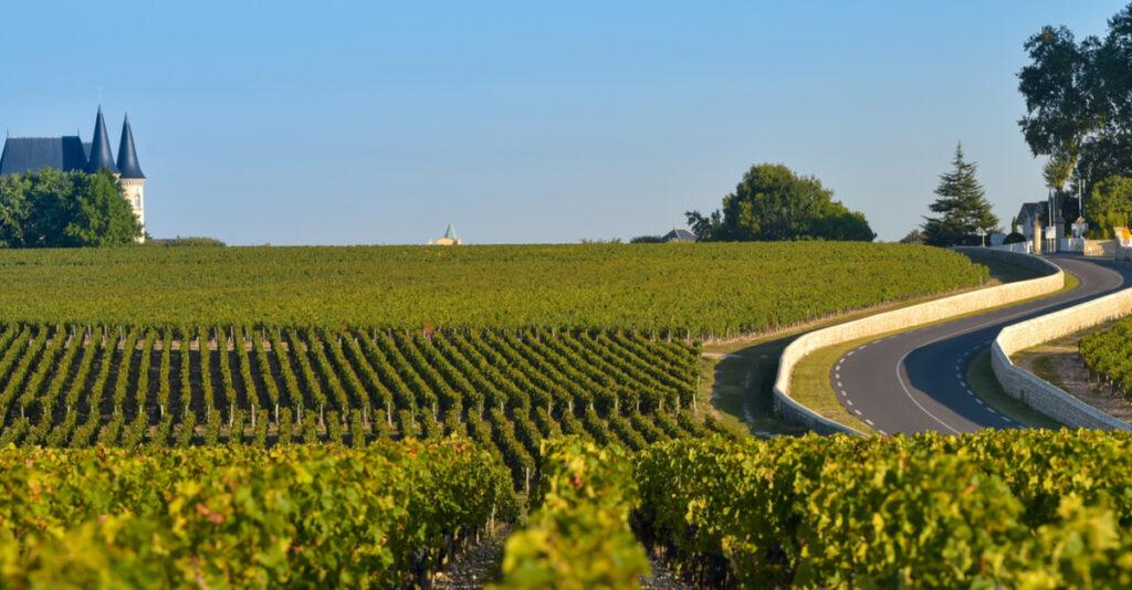 Vineyard in Medoc, France.