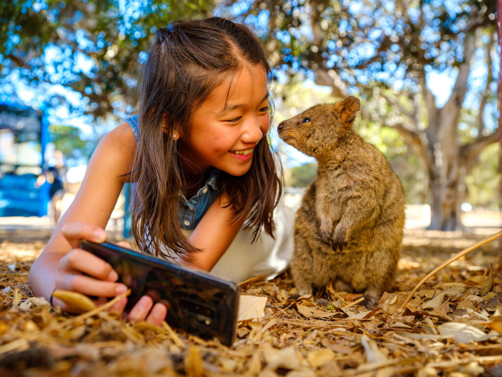 A quokka, on Rottnest Island, Western Australia takes picture with little girl.