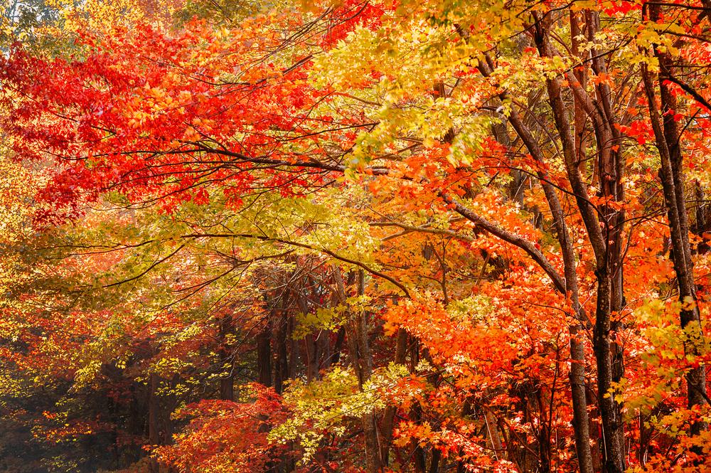 Fall foliage on the Blue Ridge Parkway in North Carolina.
