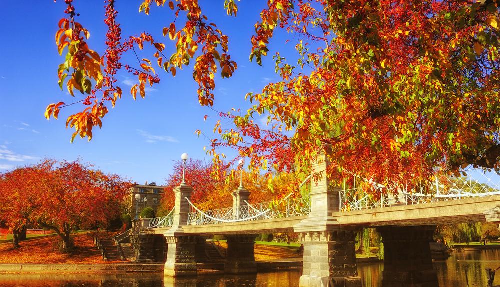 Foliage at Boston Common