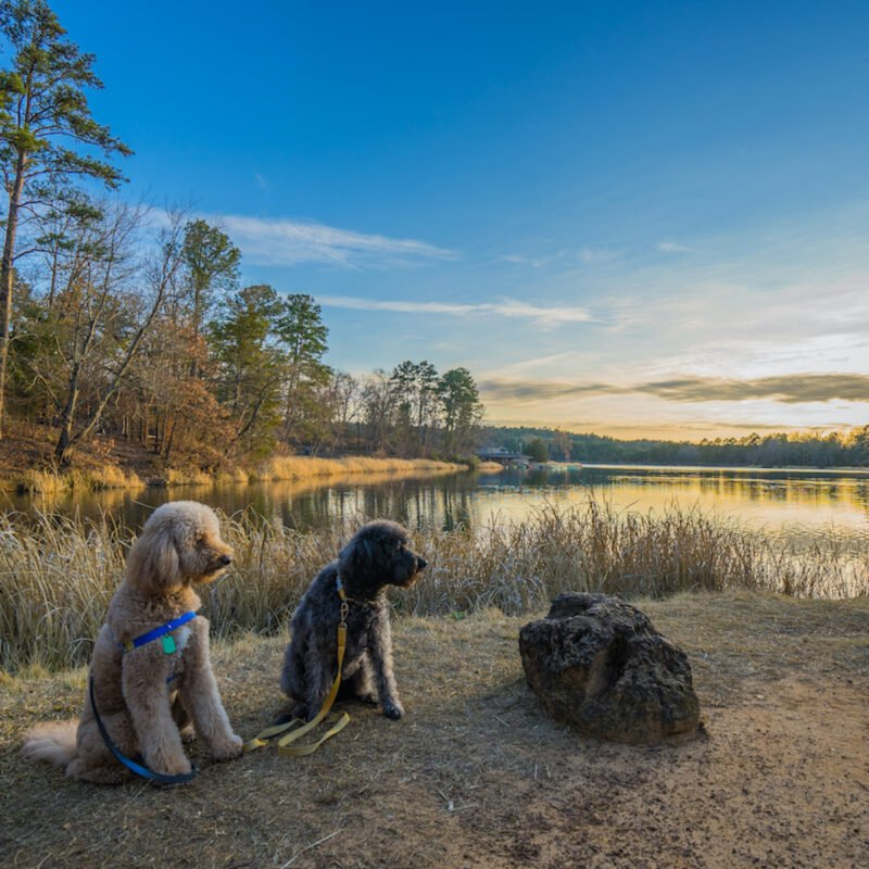 Two dogs sit in front of lake at Tyler State Park