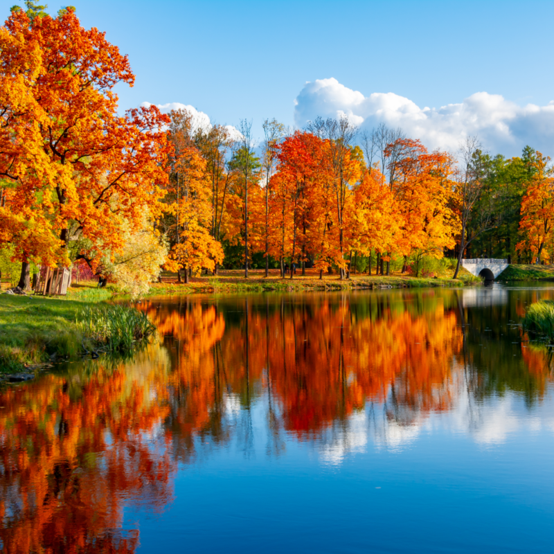 Fall foliage trees and reflection over lake