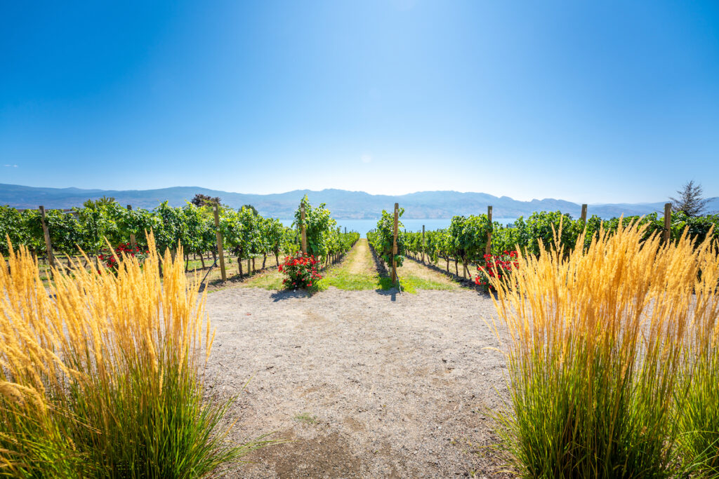 Okanagan wine country in Western Canada, British Columbia. Landscape.