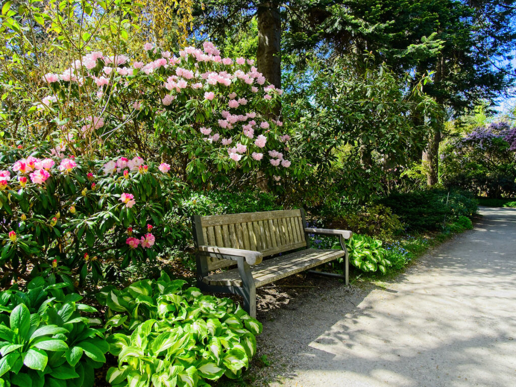 Springtime blooms with walkways and benches in public Finnerty Gardens in Victoria BC