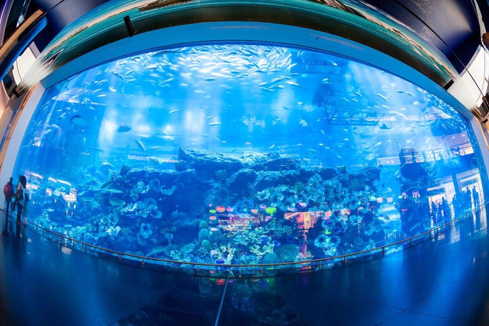 Dubai place to visit: Dubai Zoo and Underwater Aquarium