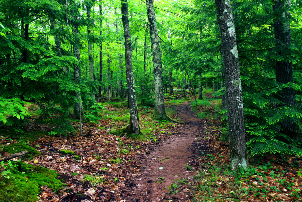 The escarpment trail at Porcupine Mountains State Park winds through a Northwoods forest.