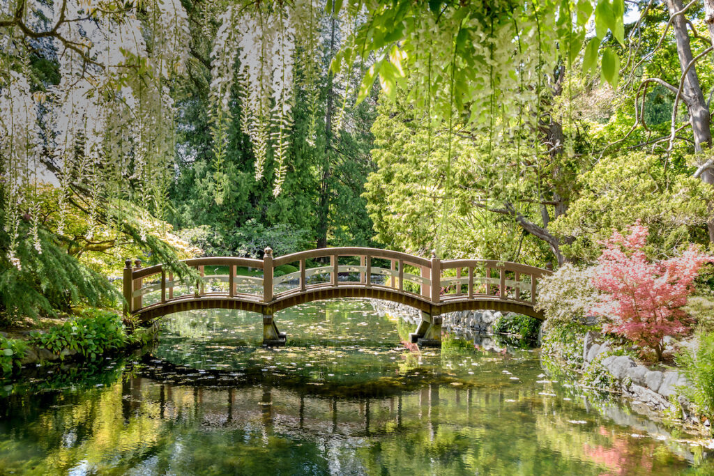 Japanese Garden at Hately Castle (Royal Roads University) Victoria BC, Canada. View of a small foot bridge