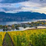 Vineyard overlooking a subdivision Okanagan Lake Kelowna British Columbia Canada in the fall.