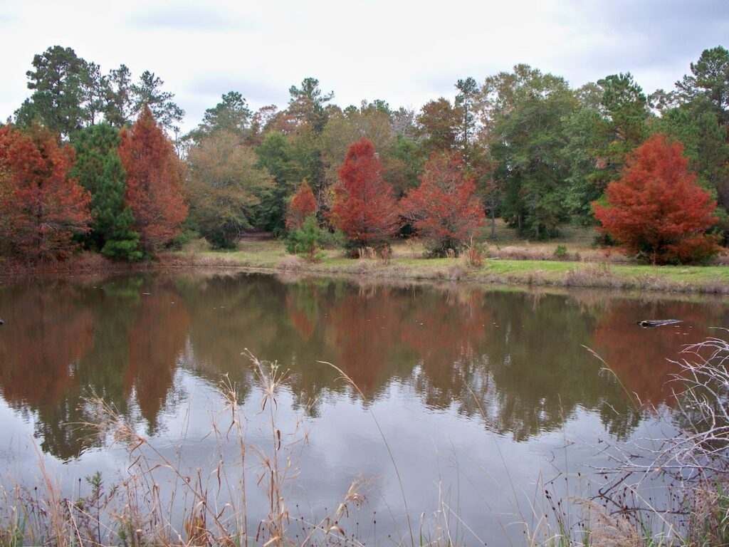 Fall Pond in The Piney Woods.