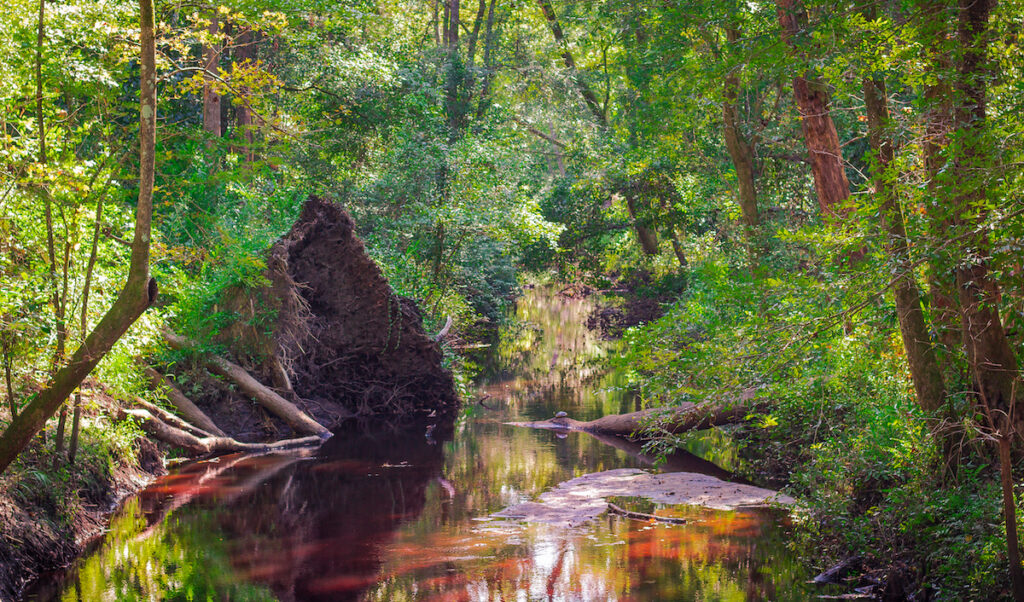 A creek a the Great Swamp Sanctuary in Walterboro, SC.