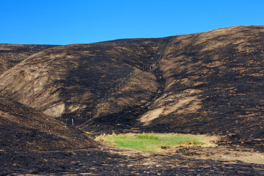 Hillside charred, fence along left side and a small patch of green grass spared from the inferno in Napa & Sonoma.
