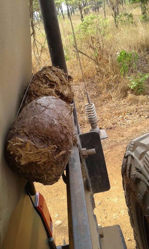 Dried elephant dung on the back of a safari.