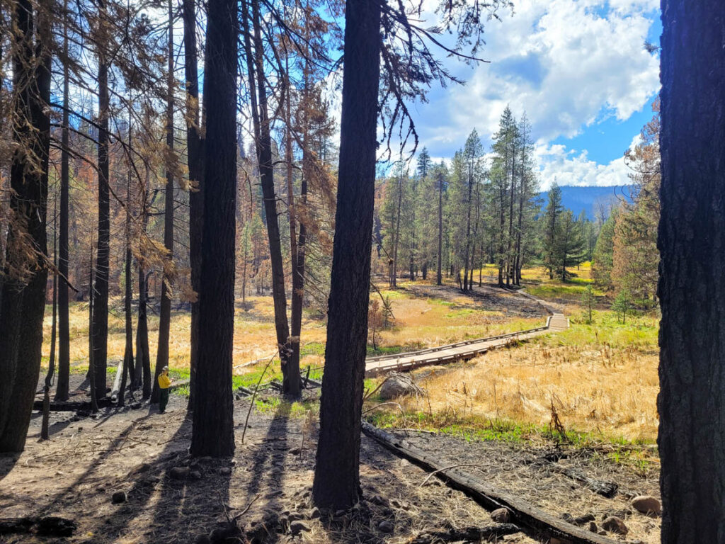 A member of a Burned Area Emergency Response (BAER) Team surveys a section of boardwalk near the Warner Valley Trailhead burned by wildfire