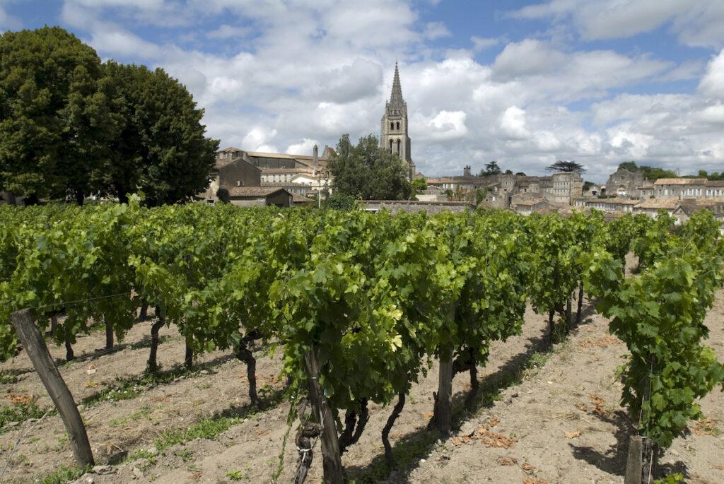 Vineyard in St. Emilion, France.