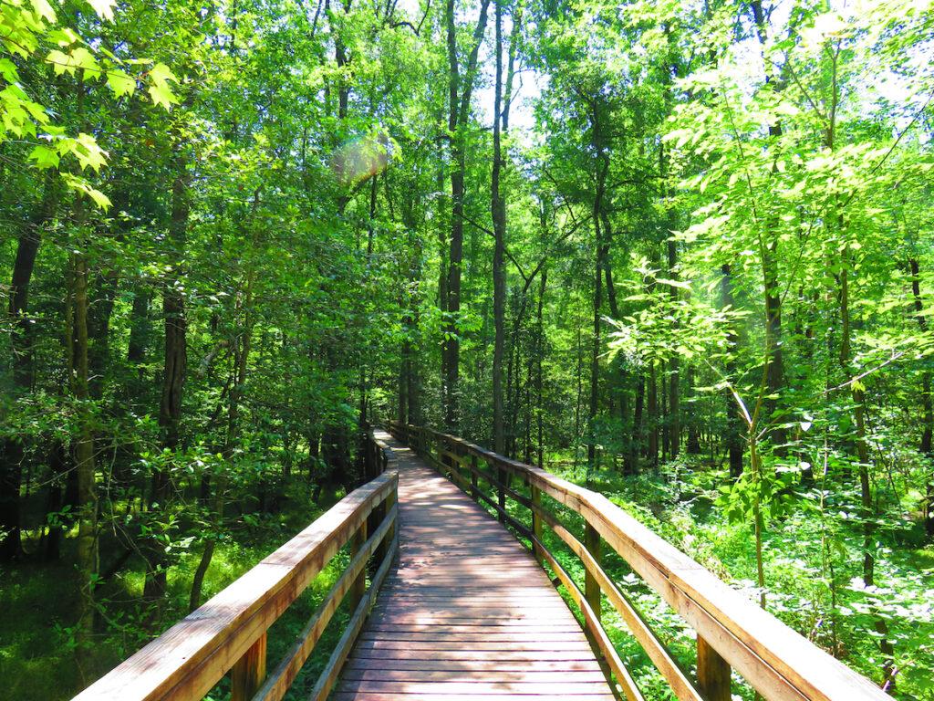 Congaree National Park, South Carolina.