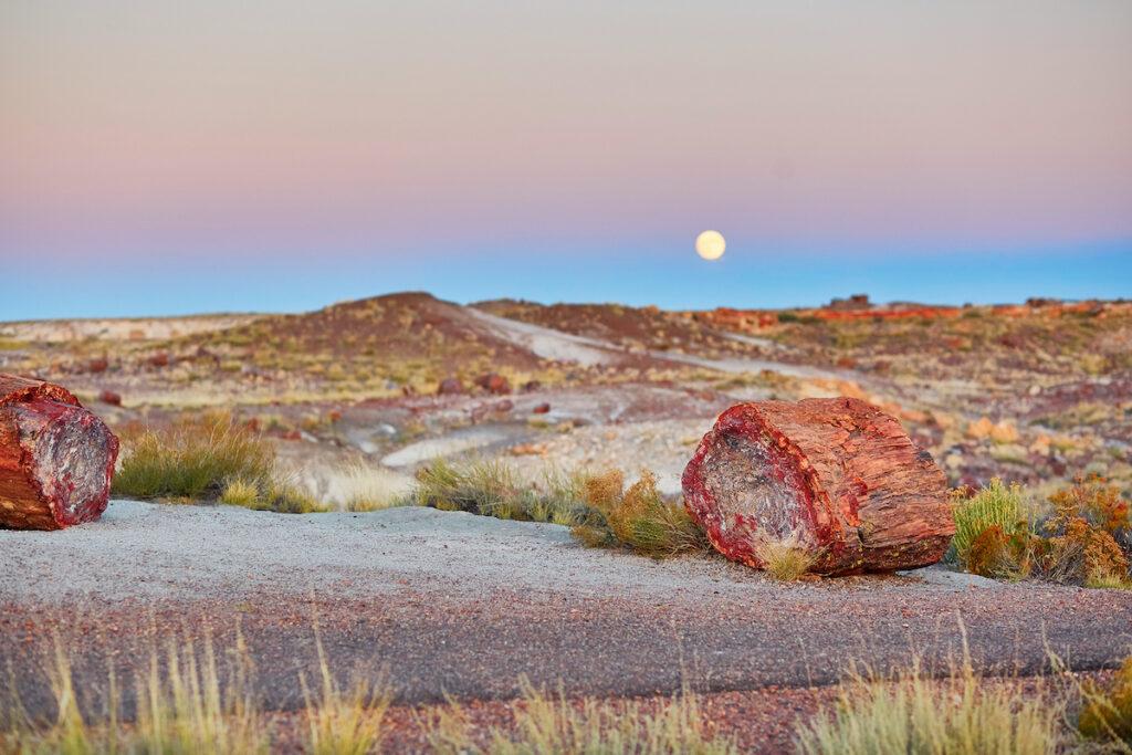 Petrified Forest National Park, Arizona.