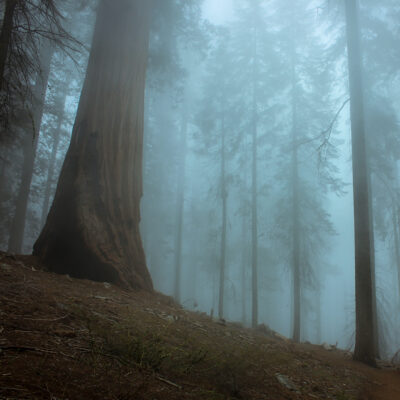 Foggy day in Sequoia National Park