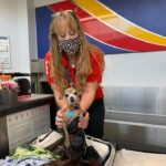 Icky the dog, who was found in her owner's bag at the airport.