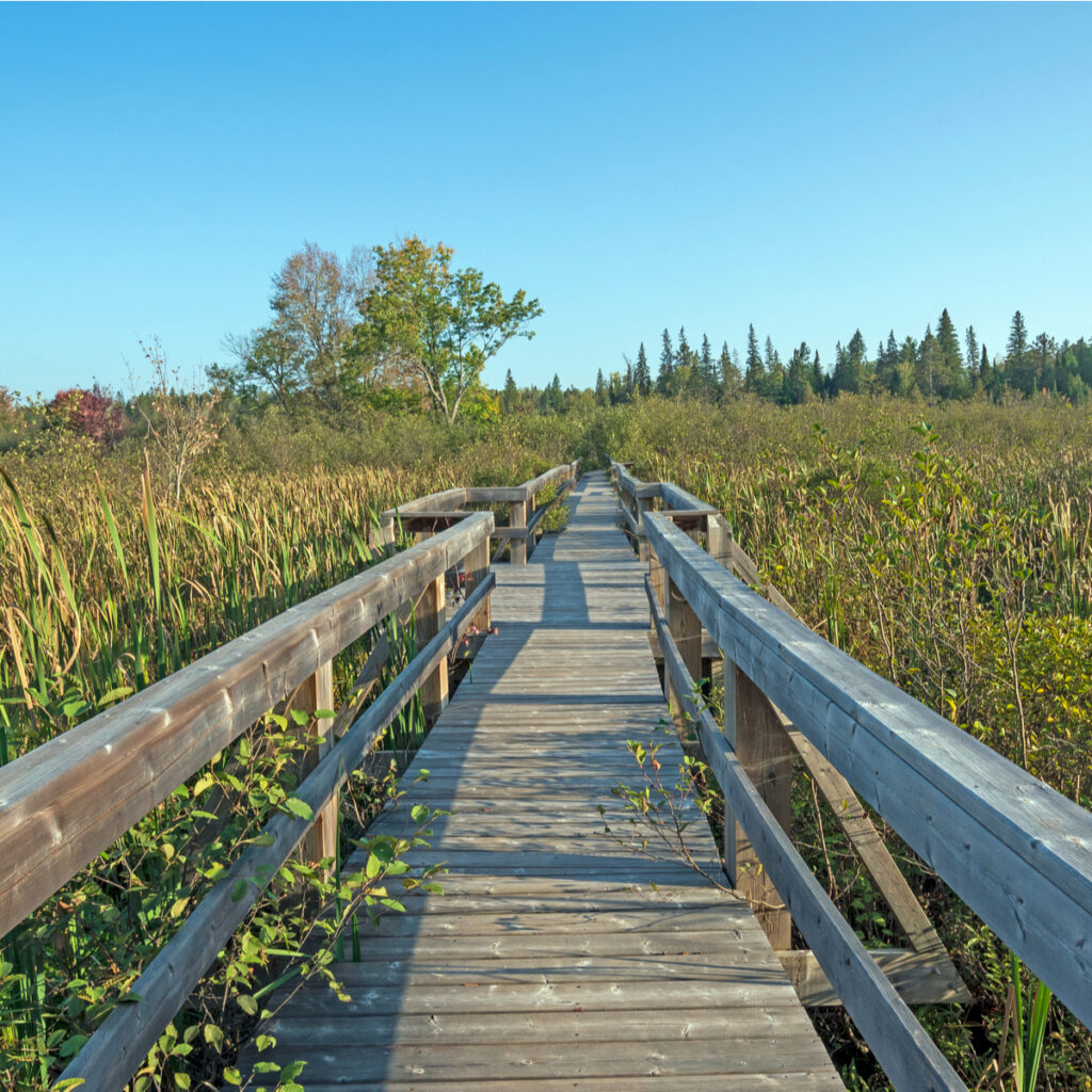 Wooden walkway at Samuel De Champlain Provincial Park, Canada.